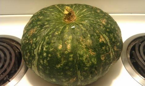 Whole kobucha squash